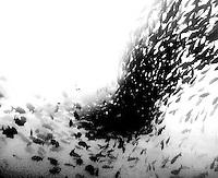 Fish-shoal