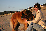 Murphy the Leonberger enjoying Cannon Beach, Oregon