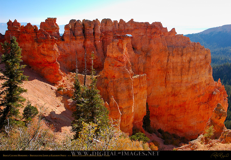 Bryce Canyon Hoodoos, Bristlecone Loop at Rainbow Point, Bryce Canyon National Park, Utah