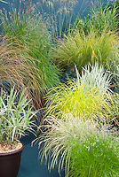 Ornamental Grasses for Containers Stock Photos