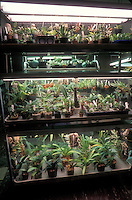 Fluorescent light tube cart for growing orchids indoors, with variety of orchid plants