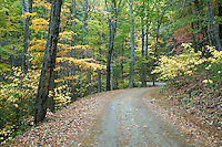 Along Rich Mountain Road, Great Smoky Mountains National Park