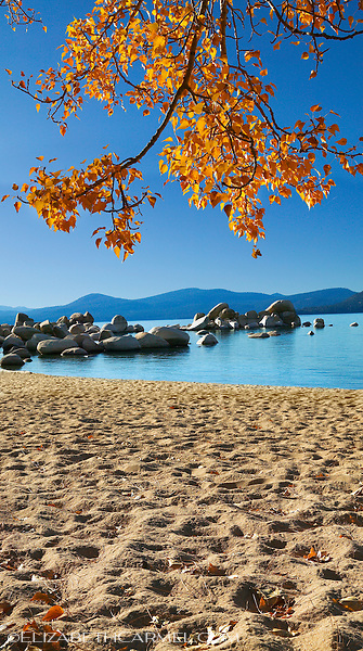 Autumn Leaves, Sand Harbor