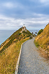 Walking track to Nugget Point in New Zealand. This is on the very south-east tip of the south island of New Zealand. Theres not much between here and Antarctica.