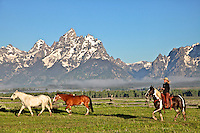 Cowgirl Rounding of the horses on the Traingle X ranch in Jackson Hole Wyoming. Wranglers round up the ramuda for a days work on the Triangle X Guest Ranch in Jakcson Hole Wyoming.