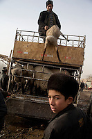 Uighur sellers unload lambs and sheep for sale at the Sunday Animal Market in Kashgar, Xinjiang, China.