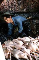 Geese being prepared at an illegal goose farm in a factory area near Songgang, Pearl River Delta region.<br /> 18-OCT-02