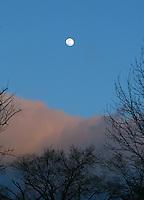Moonrise over trees in Charlottesville.