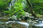 Spring flow along Whiteoak Run, Whiteoak Canyon, Shenandoah National Park, Virginia