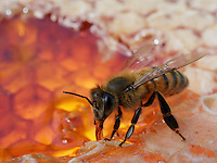 Inside a bee hive - Honeybee biology