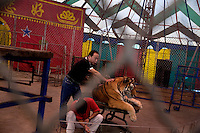 Trainers hold a tiger in the animal performance tent at the Tianjin Zoo in Tianjin, China.