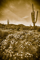Sepia Spring - Arizona