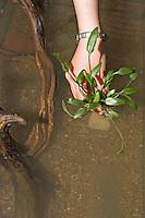 Kinder richten ein Aquarium ein, Schritt 6, verschiedene Wasserpflanzen werden sortiert und ins Glasbecken eingepflanzt