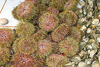 Sea urchins are sold at a local market in Chile.