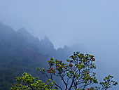 A red 'ohia flower tree with misty jagged mountain at Kalalau Valley on Kaua'i.