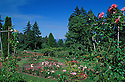 Washington Park Rose Garden with Asian woman photographing family; Portland, Oregon.