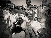 West, Africa, Mali,cattle market