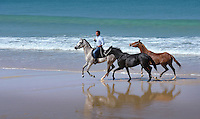 Horses from the local stable are exercised along the miles of sandy beach on the Troia peninsula