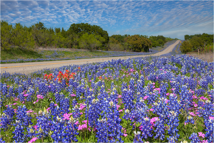 One of the best drives each spring when the wildflowers are in bloom is between Llano and Castell. Often in early April, the roadsides can be filled with bluebonnets and other colorful blooms.