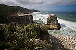 The gannet colony at Muriwai Beach, located on the west coast of the North Island of New Zealand.
