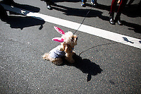 A dog wearing bonny-ears it's seen at the fifth avenue during the annual easter parade in Manhattan, New York, 03.27.2016. This annual tradition has been taking place in New York City for over 100 years, Photo by VIEWpress.
