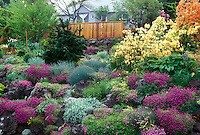 Beautiful spring flowering garden landscape with house, rhododendron azaleas, alpine rock garden plants, fence, trees, evergreens, shrubs, mix of blooming plants amid stones and boulders