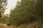 Pisgat Zeev-Neve Ya'acov forest