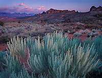 Following an afternoon thunderstorm, blue-green sagebrush appears particularly vibrant against the red sandstone  of the Utah desert
