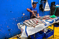 A Panamanian fisherman cleans the fish at Mercado de Mariscos seafood and fish market in Panama City, Panama, 1 February 2015.