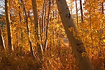 This image was taken in the Autumn of 2004- grass lake area along highway 89, Luther Pass, CA