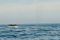 Whale watching. Press trip to Los Cabos Baja California. Mexico