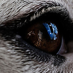 Close up of a dogs eye