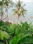 Palm and Andaman Sea