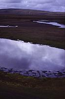 ISLANDA: paesaggio naturale. Pozze d'acqua e rivoli di fiume su un territorio pianeggiante. Animali al pascolo. Sullo sfondo una collina e cielo nuvoloso.
