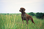 German Shorthair Pointer Shopping cart has 3 Tabs:<br />