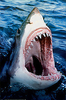 14/01/10 Shark victim