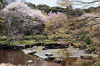 Cherry blossom in full bloom surrounds the ornamental lake in Higashi-Gyoen, the East Gardens of the Imperial Palace inTokyo