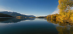 Autumn trees around Glendhu Bay in Lake Wanaka. Otago Region. New Zealand.