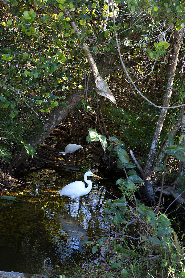 Birdwatching in the Shark Valley area of Everglades National Park, Florida, USA