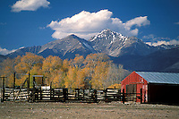 Red Barn and yellow leaves on trees in fall below mountains and blue sky with clouds, Rocky Mountains, Colorado.