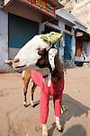 Goat Dressed in Clothes-Bazaar in Taj Ganj, Agra