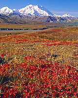 Bearberry & Denali (Mount McKinley), Denali National Park & Preserve, Alaska   Highest peak in North America