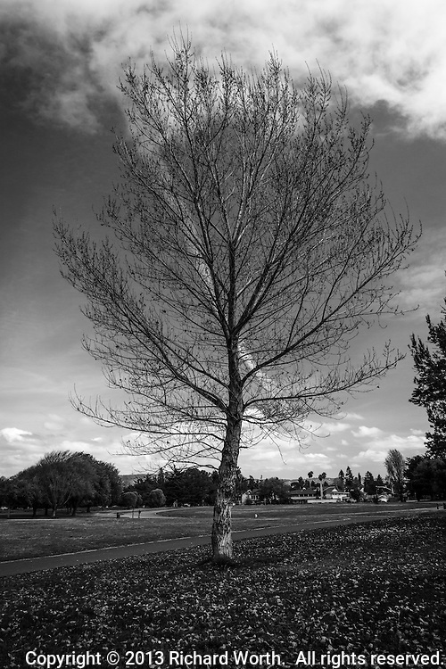 The network of limbs and branches on a leafless, winter-bare, tree against a sky with patchy clouds, at Crown Beach in Alameda, California.