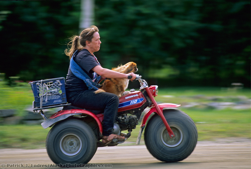 Woman carries a dog on her fourwheeler down the streets of Eagle Alaska.