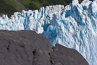 Hikers pause to view the massive tidewater face of Barry glacier, Prince William Sound, Alaska.