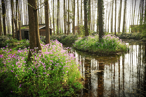 Timber cabin surrounded by spring wildflower with nature stream.
