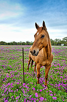 On our search for wildflowers this horse posed for a moment in a field of phlox. We tried to get her to pose but she lost interest as soon as she realized we had no treats and continued her grazin.