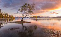 A glorious autumn sunrise at Wanaka's famous 'tree in the lake' in the South Island of New Zealand