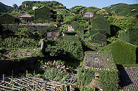 Houses are completely covered with leaves at the abandoned fishing village of Hautouwan on the island of Shengshan July 26, 2015. Every day hundreds of tourists make their way on narrow footpaths between some of 500 houses covered by bewildered vegetation at Hautouwan, once home to over 2000 fishermen. The fishing village, a part of the Shengsi archipelago east of Shanghai was abandoned in early 90s and now only less than a half dozen people live there. REUTERS\Damir Sagolj