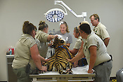 Veterinary Hospital at Turpentine Creek Wildlife Refuge